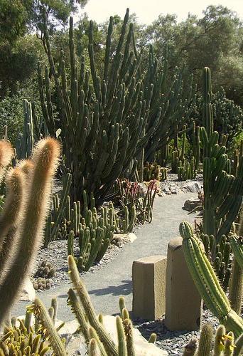 Cactus Garden 5