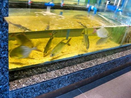 Isla Sugbu Seafood City: Cebu's Newest Seafood Destination