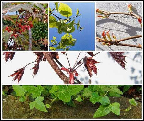 a few of my favorite garden plants doing so well - 'growourown.blogspot.com' ~ an allotment blog