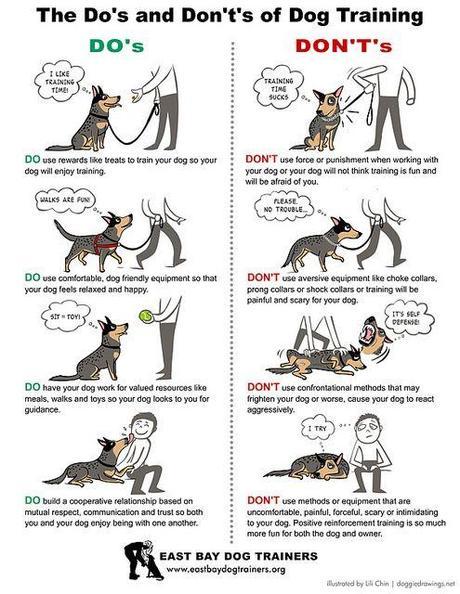 Top Six Dog Housetraining Rules