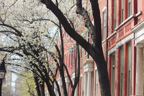 Spring in the City | Photo Diary