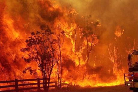 bush fires in Australia and the elephantine solution !!!