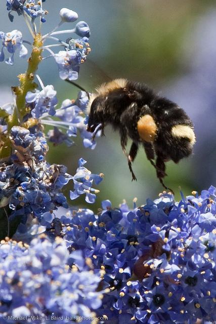 Could the Heavy Pollen Season this Spring help the Bees?