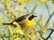 Spectacular Migratory Birds
