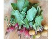 Pulling Colourful Radishes
