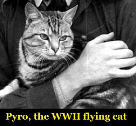 Pyro, the WWII flying cat