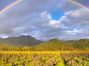 Rainbow Organic Wines!
