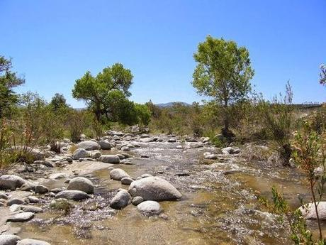 Earth Riparian System Deterioration:  A California Example