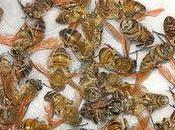 This What's Killing Bees?