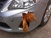 Chicken Survives 70mph Causes Damage Bumper