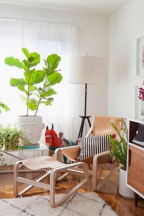 Decorating with plants and house plant inspiration