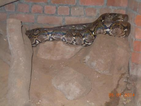 I think this was a Russell Viper