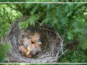 Birdie's Nest Outside Slider
