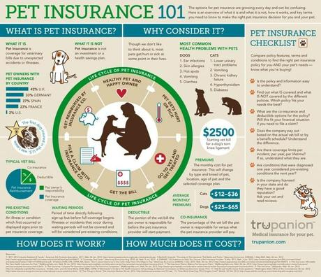 Setting-Up a Pet Insurance for Your Dog