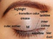 Apply Eyeshadow Correctly