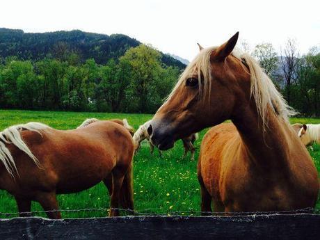 Friendship in Austria