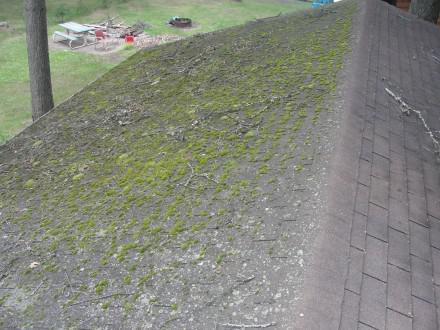 Mossy roof before