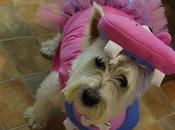 """What Stylish Pooch Have..."""""""