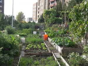 USDA Doles out 10 Grants for People's Gardens