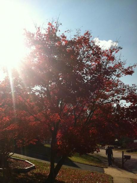 essay fall season