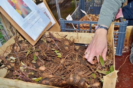 Tyntesfield: Digging deep and winning the English Heritage Angels Award