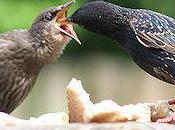Amazing Images Baby Birds Dinner Time