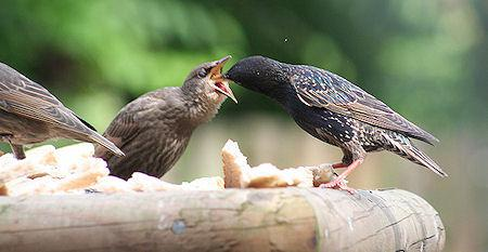 Amazing Images Of Baby Birds At Dinner Time