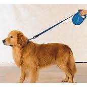 Retractable Leashes: The Good and The Bad
