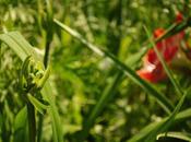 Summer Gardening Skills: Perseverance