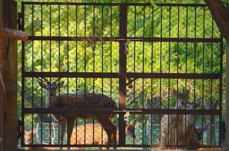 Are zoos cruel to animals essay