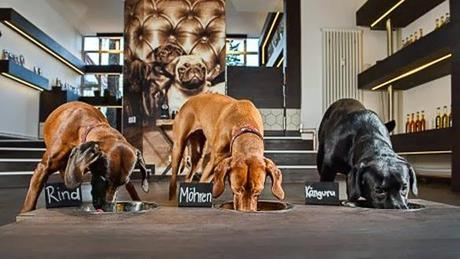 Germany's 1st Restaurant for DOGS Serves Dishes Fit for Humans!