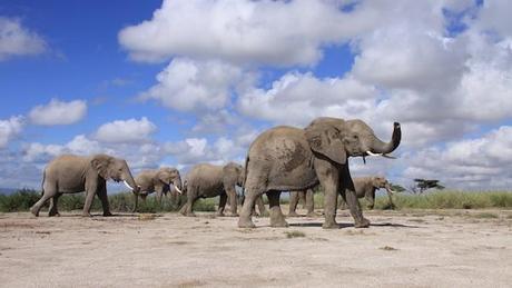 0530-Amboseli-afterpb-Shannon