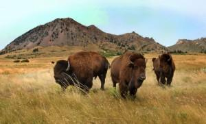 Buffalo-Bear-Butte