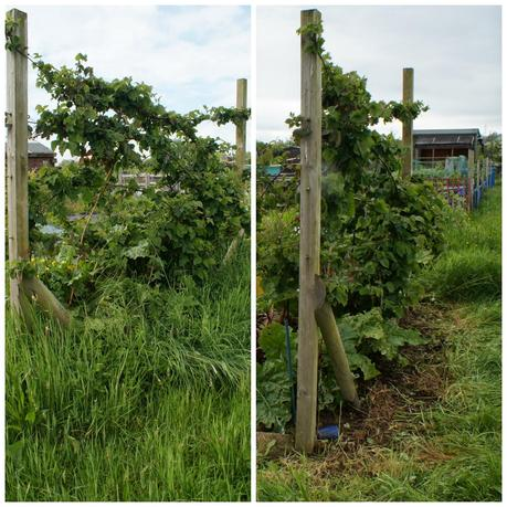 saved the blackberry and rhubarb from so much grass - 'growourown.blogspot.com' ~ An allotment blog