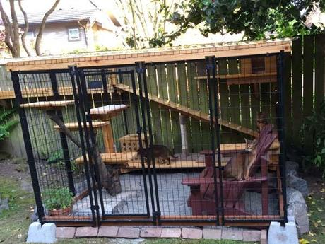 In between projects.  Catio for Eddie, Max and Riley