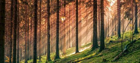 Study Looks Into Trends in Forest Biomass for Energy in EU