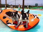 Pooches Holiday World's Waterpark DOGS Open!
