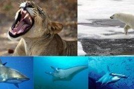 Global Protection Proposed for Sharks, Rays, Sawfish, Polar Bears and Lions – UNEP
