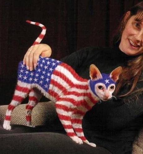 Cats Representing The Top 10 Most Powerful Countries