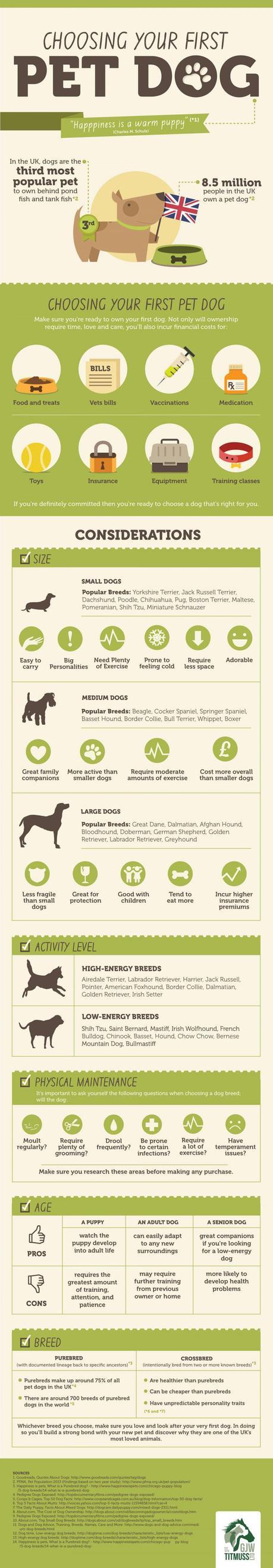 La elección de la comida para perros derecho