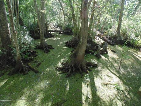 gaddis-swamp
