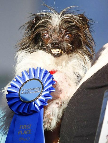 Ugliest Dog 2014 Winner Brings Awareness To Animal Rescue
