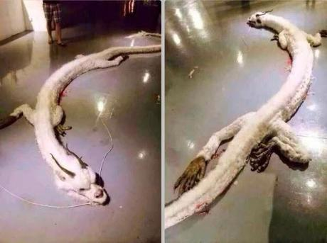 White Dragon Found And Shot In Malaysia! Fact Or Fiction? Find Out (Video)