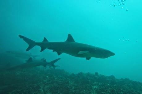 The reef sharks have it the worst.  Divers taking photos of them all the time!