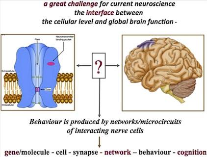 Megascience efforts and the brain.