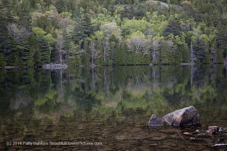 Bubble Pond Reflections © 2014 Patty Hankins