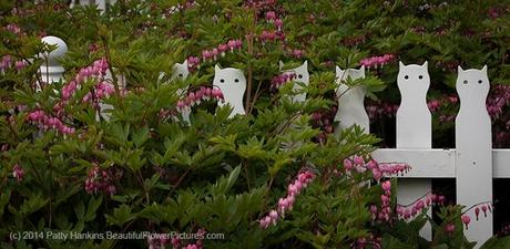 Best Garden Fence Ever! © 2014 Patty Hankins