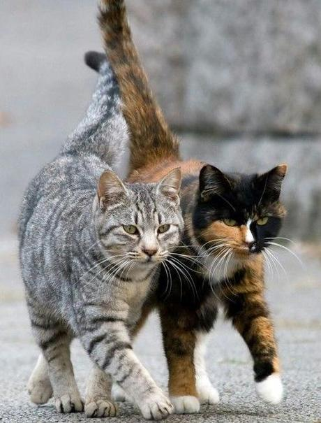 Cats Have Kittens Through