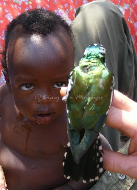 Child, Klaas' Cuckoo, Kibale Forest, Uganda birds, Birdwatching Uganda