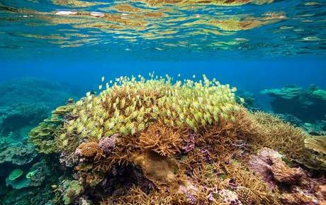 Pacific Palmyra ~  President Obama has plans to make it Marine Protected Area